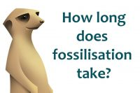 How long does fossilisation take?